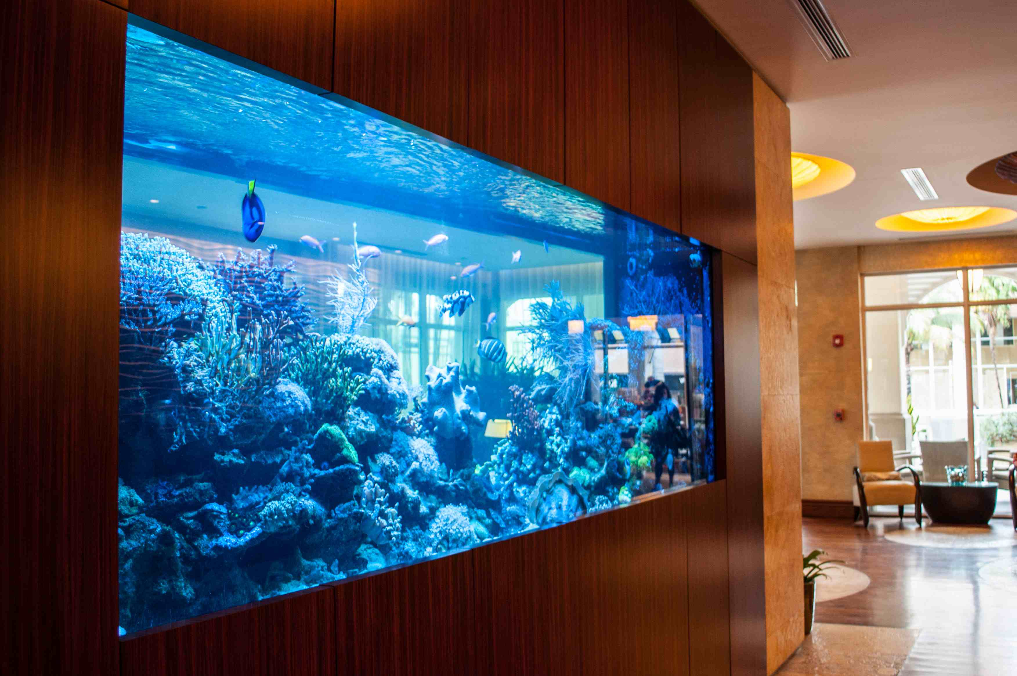Aquarium in wall home design ideas pictures remodel for Home fish tanks