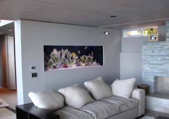 The Ultimate In Wall Aquarium For Your Living Room