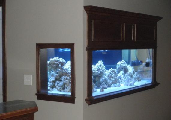 In The Wall Aquarium Idea For Your Home